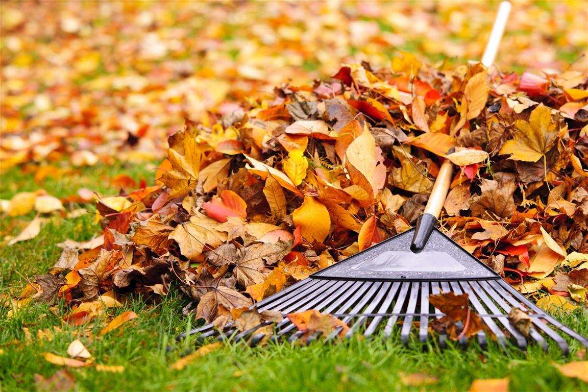 autumn-garden-clearance