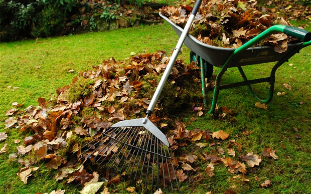 cleaning-yard