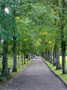 Trees In London