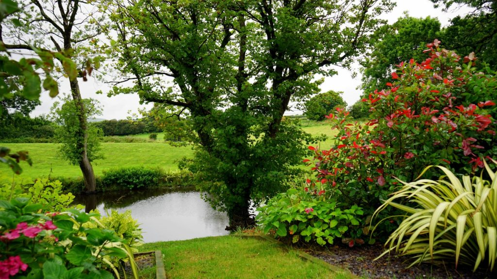 How To Recover The Overgrown Gardens