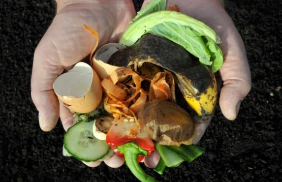 Impacts of Garden Waste Accumulation